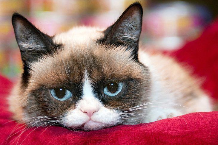 художники кот унылый фото этом фото