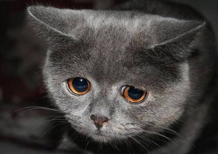 Кошка с котенком картинка для занятий нет, пришла