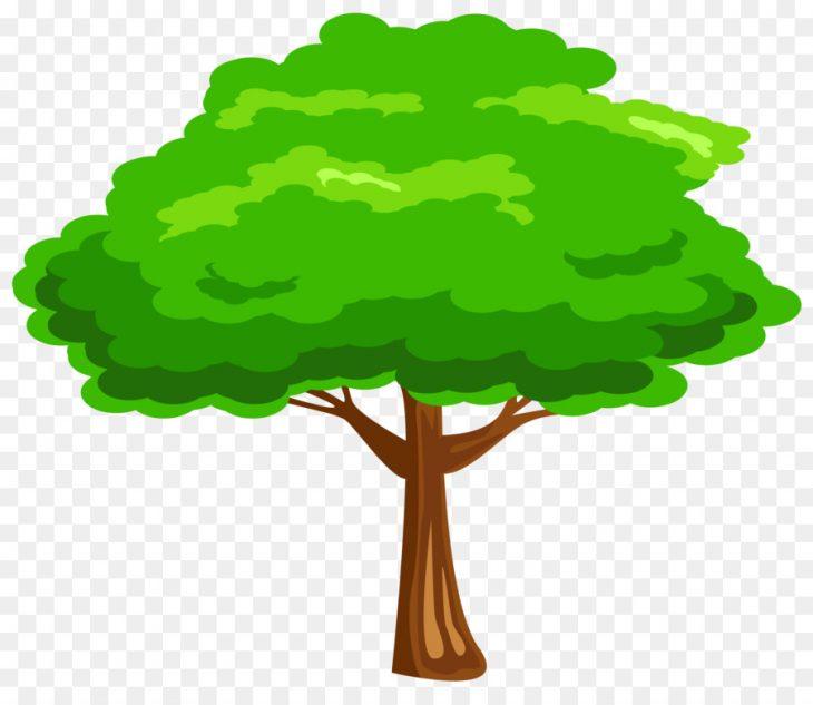 Картинки крона дерева для детей