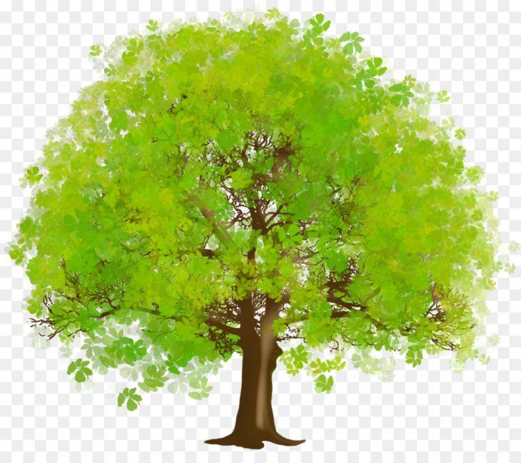 Дерево с картинки