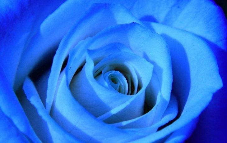 Картинки розочки синие