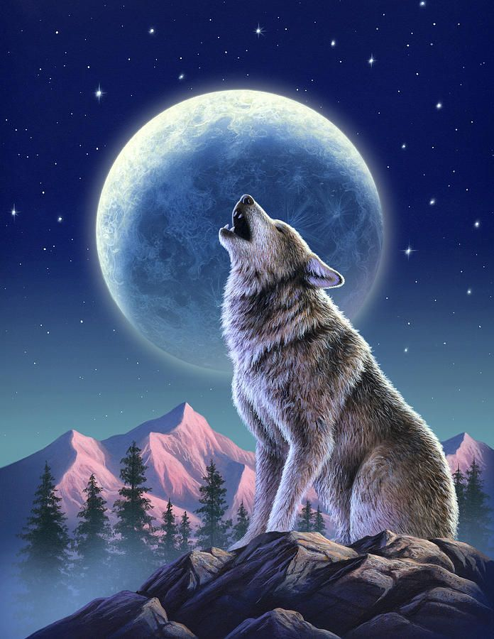 Симпатичный волк картинка