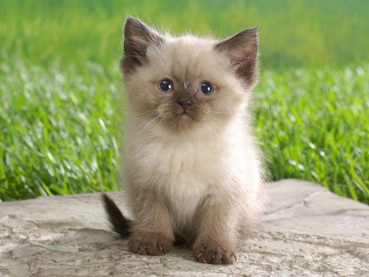 картинки котиков милых и няшных друзья очень сильно