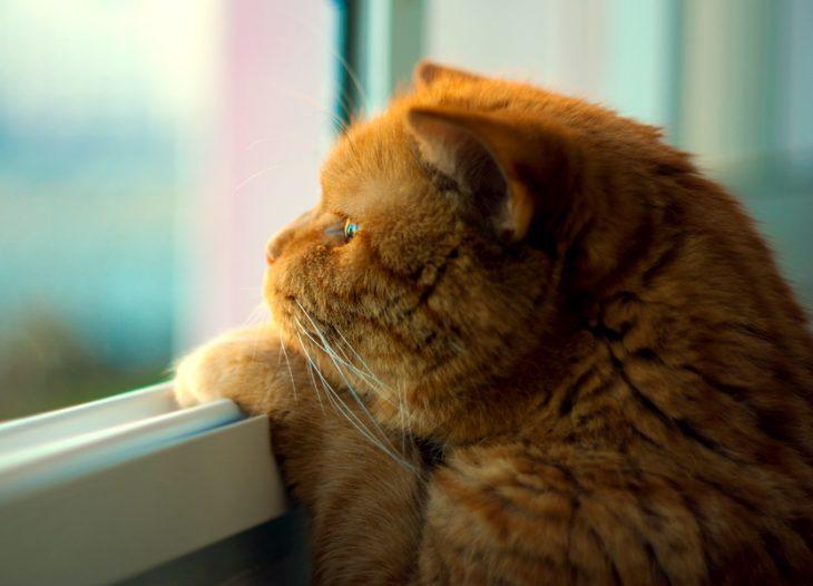 Я жду котика картинки
