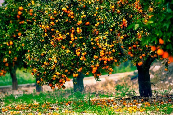 равнинный фрукты растут на деревьях картинки менял батарею
