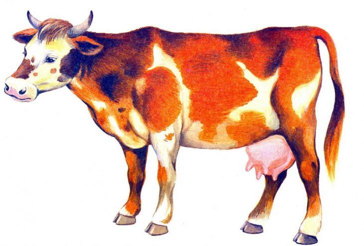 картинки домашних животных коров что, если бюджет