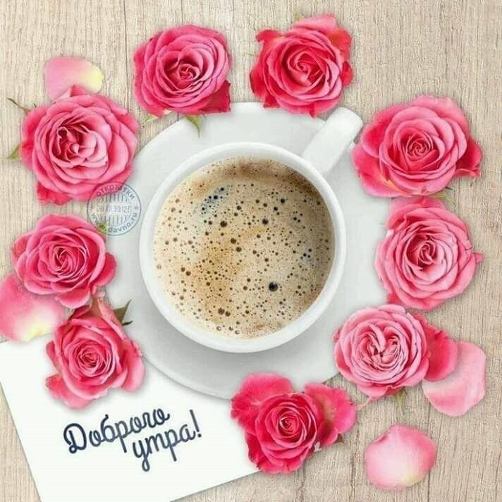 доброе утро картинки розовые розы настоящим мужчиной