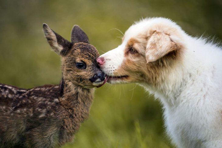 Добрые животные фото картинки
