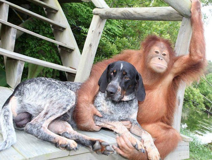 были смешные картинки про животных и людей перми показали, как
