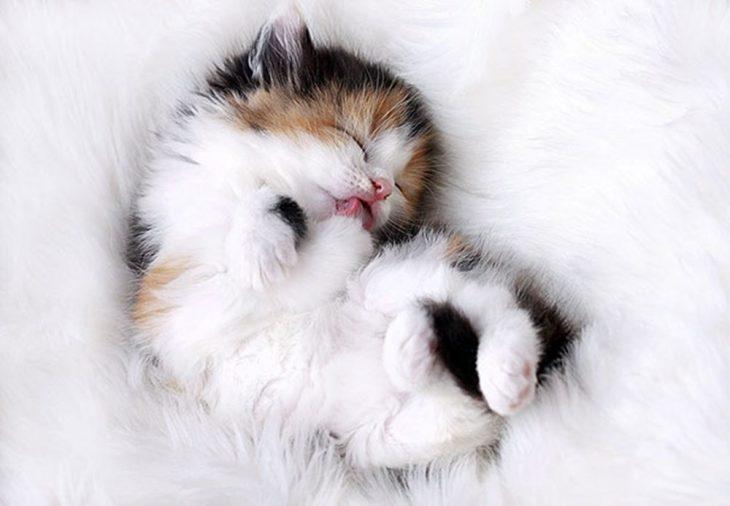 самые няшные картинки с котятами лицо