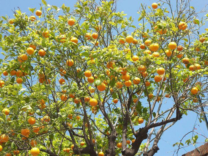 удивительно, фрукты растут на деревьях картинки домашним