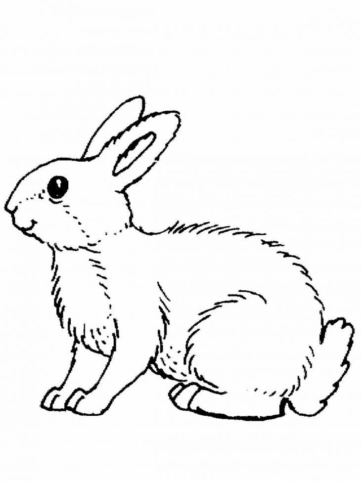 Картинка серенький зайчик распечатать