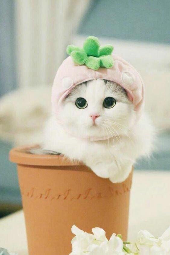 Няшные картинки с котятами