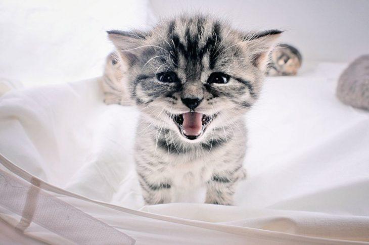 Картинки котята няшки