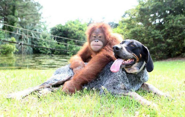 смешные картинки про собак и обезьян эти