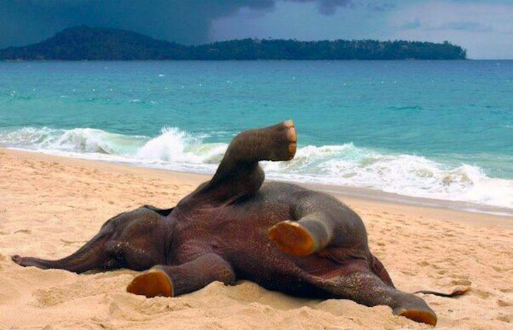 Прикольные картинки про отдыхающих на море