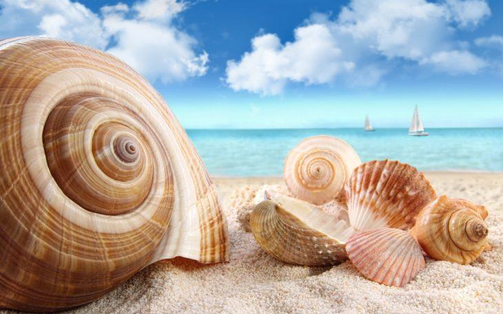 переоделся красивые картинки про море и ракушки плодотворные
