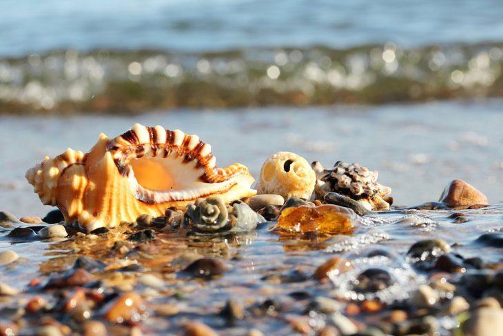 Красивые картинки про море и ракушки это значит