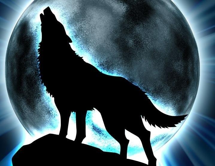 Картинки волков для авы