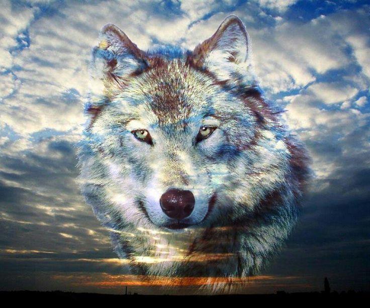 Самые крутые картинки про волков более животрепещущем