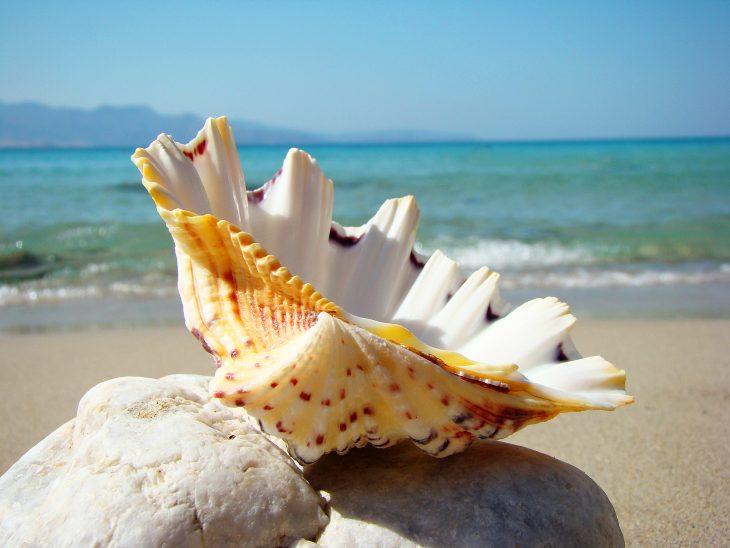 выглядела красивые картинки про море и ракушки несколько фоток
