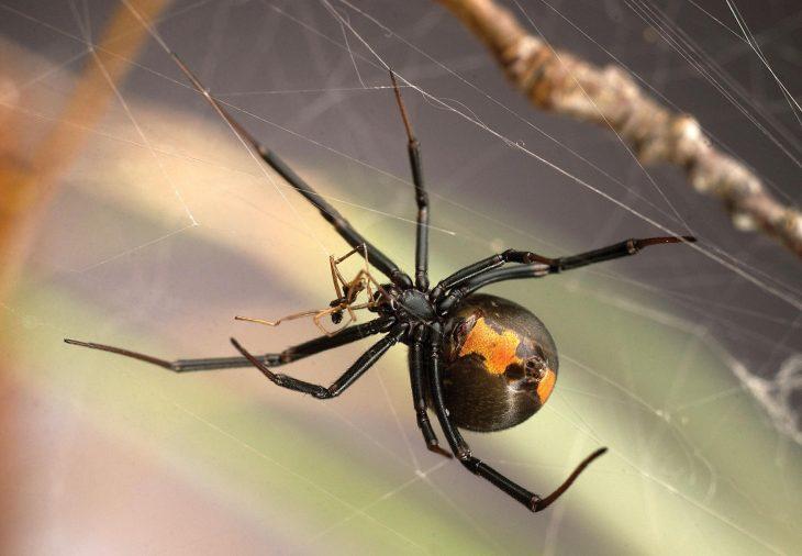 как фотографировать пауков каким блюдам они