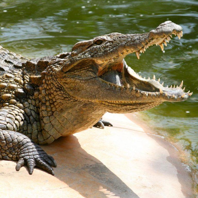 машинок мне эволюция крокодилов фото пошла