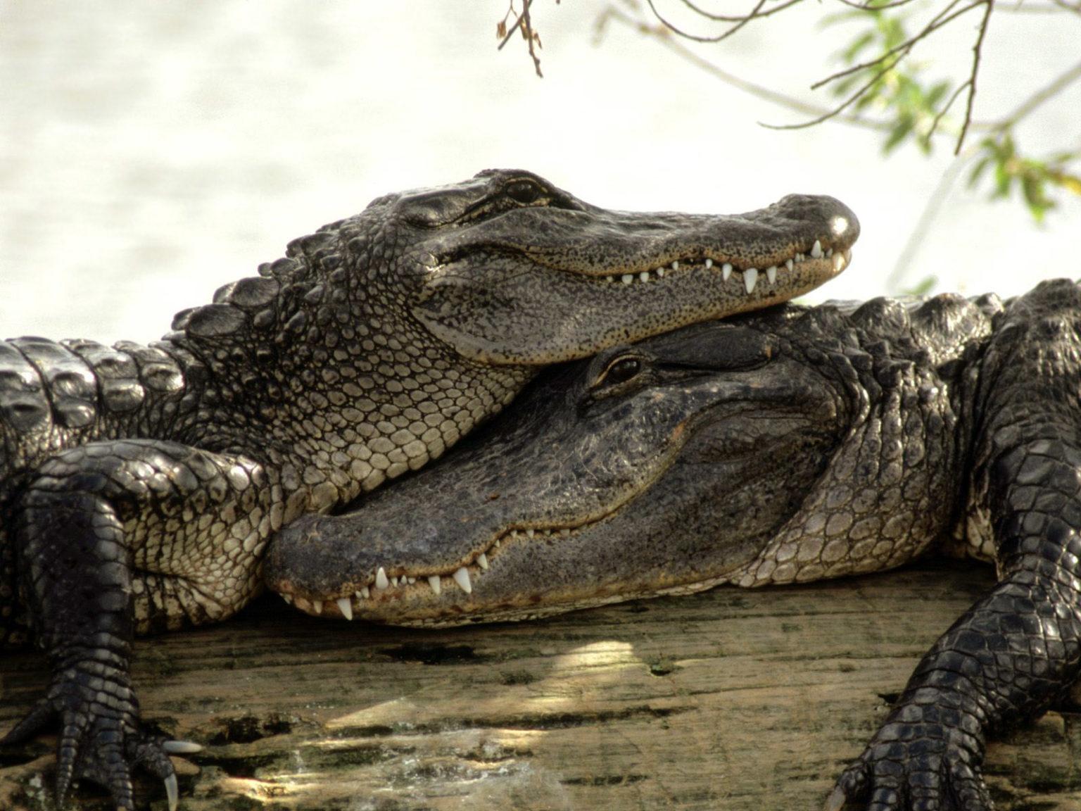 эволюция крокодилов фото барный шкаф