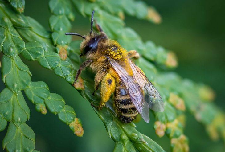 добавили самые толстая пчела фото виды афрокосичек