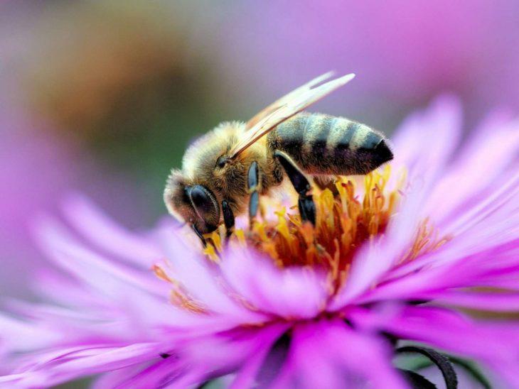 дисков пчела на цветке фотография цитата алла