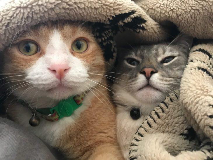 фото смешных котиков на аву